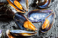 Closeup of freshly caught raw mussels. On black rock Royalty Free Stock Photo