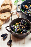 Closeup of freshly cooked mussels at home Royalty Free Stock Photos