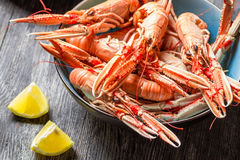 Closeup of freshly cooked scampi Royalty Free Stock Photo