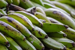 Closeup of freshly harvested green bananas in Nigeria, Africa royalty free stock photos
