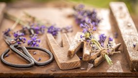 Closeup of freshly harvested lavender in a summer garden. On wooden table stock photos