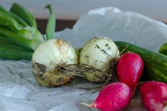Closeup of freshly harvested vegetables royalty free stock photos