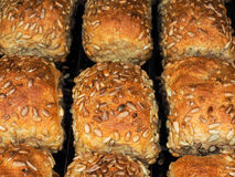 Closeup of freshly made sunflower seed buns, side by side. On a tray at close-up Royalty Free Stock Photo