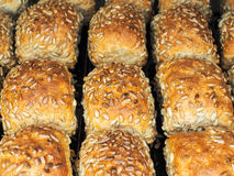 Closeup of freshly made sunflower seed buns. Side by side, on a tray at close-up stock images