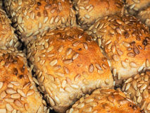 Closeup of freshly made sunflower seed buns. Side by side, on a tray at close-up, side by side stock photos