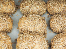 Closeup of freshly made sunflower seed buns. On a waxed paper tray at close-up Royalty Free Stock Photo