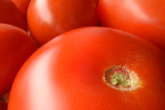 Closeup of freshly picked tomatoes Royalty Free Stock Images