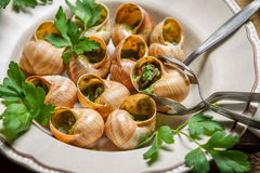 Fried snails with garlic butter Royalty Free Stock Image
