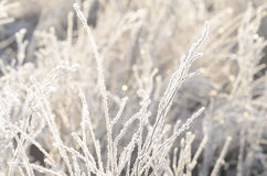 Closeup of frost on grass Royalty Free Stock Image