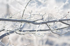 Closeup of frost on tree branch Royalty Free Stock Image