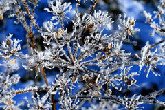 Closeup of frosty plant Stock Images