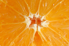 Closeup fruit of orange Stock Photography