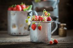 Full of vitamins wild strawberries in the old wooden box Royalty Free Stock Photography