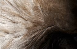 Closeup of a fur texture from cat`s head.  Stock Photos