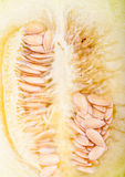 Closeup of a Galia melon Stock Photo