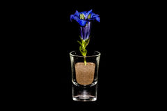 CloseUp Of Gentian In Glass On Black Background Stock Photography