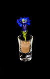 CloseUp Of Gentian In Glass On Black Background Royalty Free Stock Image