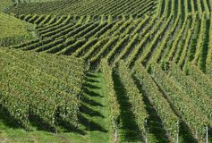 Geometric vineyard landscape. Closeup of the geometric vineyard landscape in Durbach, Baden region of Germany royalty free stock images