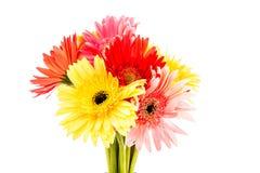 Closeup gerbera flower , white background Stock Photos