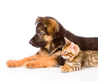 Closeup german shepherd puppy and bengal kitten lying in profile. isolated Royalty Free Stock Images