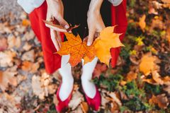 Closeup of girl`s hands holding autumn maple tree leaves. Closeup of girl`s hands holding beautiful bunch of bright aun maple tree leaves stock photography