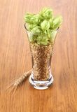 Closeup of glass with grains and hop. Royalty Free Stock Photo