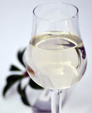 Glass of water. Closeup of tall stem glass with water, studio background Royalty Free Stock Image