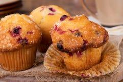Golden Brown Cranberry Muffins Stock Photos