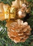 Closeup golden cone on fir branch Stock Photography