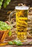 Closeup of golden ears in fresh beer Stock Photography