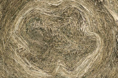 Closeup of golden hay roll circular haystack showing straw texture Royalty Free Stock Images