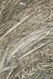 Closeup of golden hay roll circular haystack showing straw texture. Vertical royalty free stock photography