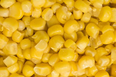 Closeup of Golden sweetcorn grains Stock Photos
