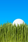 CloseUp Of Golf Ball  On Grass. A Detailed Low Angle Close Up Shot of a Golf Ball, Lying In the Green Grass with Blue Sky Copy Space ~ Clipping Path Stock Photo
