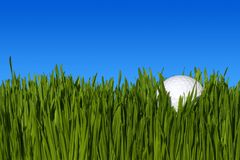 CloseUp Of Golf Ball On Grass. A Detailed Low Angle Close Up of a Golf Ball, Lying In the Green Grass with Blue Sky Copy Space ~ Clipping Path Stock Photos
