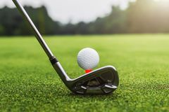 Closeup golf club and golf ball on green grass wiht sunset. Course sport golfing leisure activity putting hitting lifestyle outdoor play game training stock photos