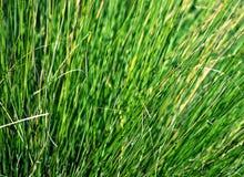 Closeup of Grass Stock Photography