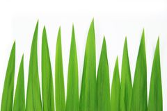 Closeup grass. On a white background Stock Images