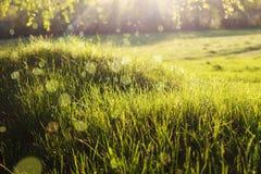 Closeup grass with blur bokeh and sun rays stock photos