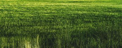 Grassfield. Closeup of the grass field Royalty Free Stock Photos