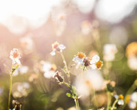 Closeup grass flower Royalty Free Stock Image