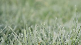 Still Dew 4. Closeup of grass on a frosty morning Royalty Free Stock Images