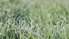 Still Dew 5. Closeup of grass on a frosty morning Royalty Free Stock Image