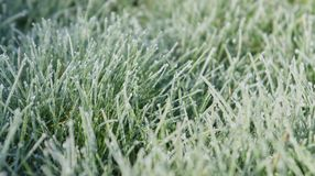 Still Dew 6. Closeup of grass on a frosty morning Royalty Free Stock Photography