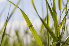 Closeup grass green background, floral sunny summer backdrop Stock Photography