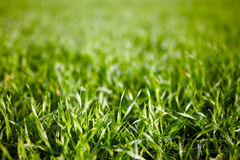 Closeup of grass Stock Photos