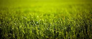 Closeup of grass Royalty Free Stock Image