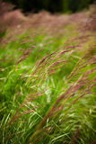 Closeup of grass Royalty Free Stock Images