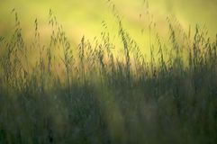 Grass in a Meadow. Closeup of grass in a meadow. Nice DOF and green hues Stock Photo