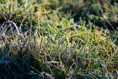 Closeup of grass in rime at sunrise. Lovely autumnal nature background Stock Photography